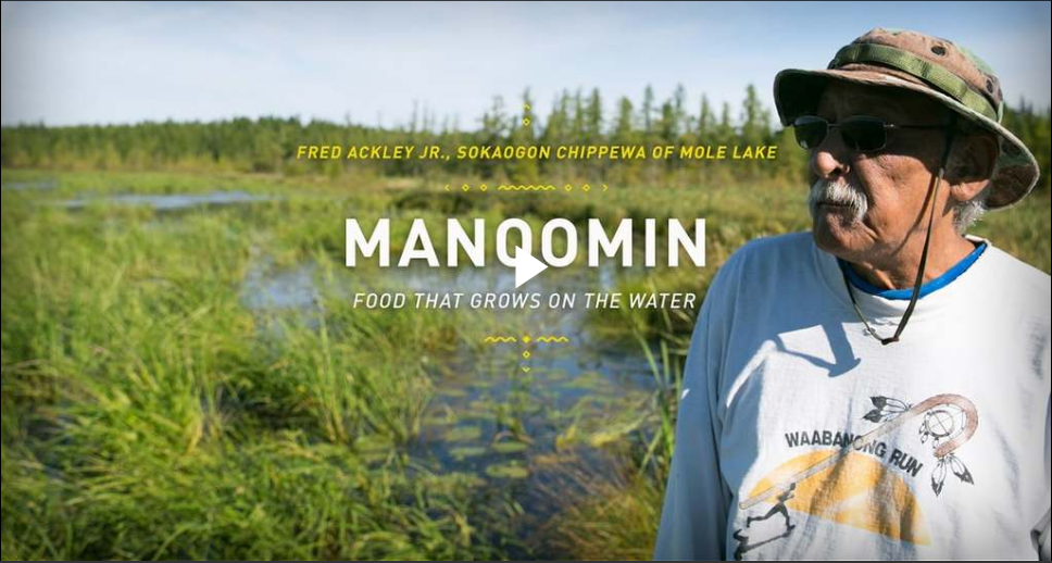 View video about manoomin, food that grows upon the water